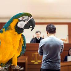 GOSPODINE PAPAGAJU, ŠTA IMATE DA IZJAVITE? Bizaran slučaj, ptica glavni svedok na suđenju za silovanje i ubistvo