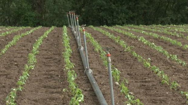 Gde raste deblja, a gde tanja paprika – iskustvo jednog povrtara iz Prijepolja