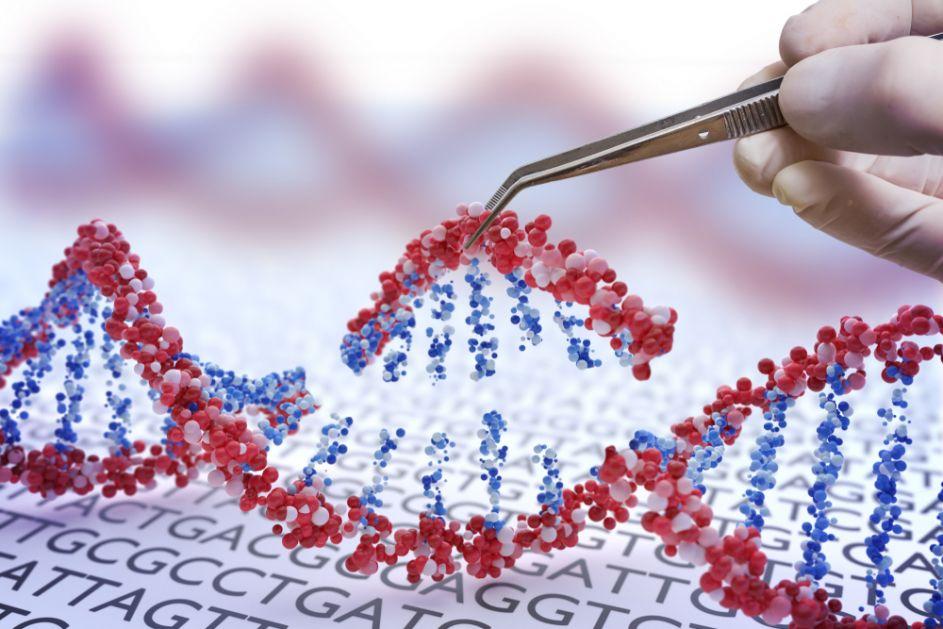 Genska terapija pomogla da paralisani miš ponovo prohoda, šta to znači za ljude