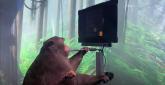 Gledajte majmuna kiborga kako umom igra Pong zahvaljujući, Elonu Musku VIDEO