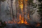 Gori u Rusiji - preko milion hektara u plamenu, građani evakuisani VIDEO/FOTO