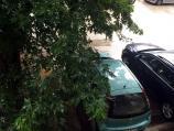 Građani traže da se orežu drveća i iseku stara opasna stabla