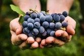 Grožđe je zdravo ali ipak nije za svakoga