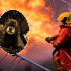 HEROJ! MALI TERIJER IH SPASIO OD SIGURNE SMRTI: Plamen zahvatio stan, pas počeo sa dramatičnom akcijom