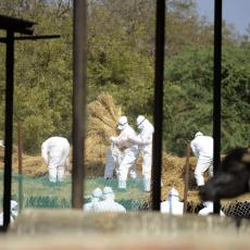 HOLANDIJA STRAHUJE OD GRIPA H5N8! Država naredila da se zatvore ptice