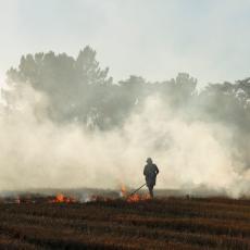 HOROR U VOJVODINI! Palili strnjiku na njivi, pa izazvali KATASTROFALAN požar! Osam LEŠEVA pronađeno!