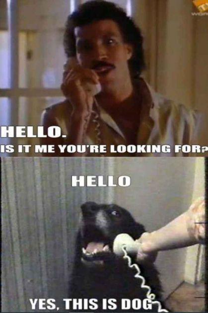Halo, ovo je pas: Ajaks je glumio u domaćim filmovima, a već 9 godina je svetski poznat mim