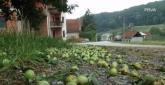 Haos posle nevremena: Sve je sravnjeno sa zemljom VIDEO