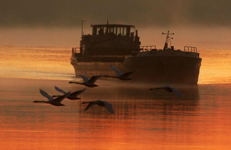 Holandija: Pronađeno 25 slepih putnika na brodu