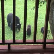 I TO NE SLUČAJNO: Otvorim ja prozor, kad tamo, mečka sa mečićima svratila u dvorište... (VIDEO)