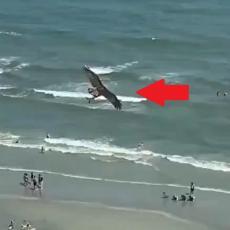 IZBEZUMILI SE! Ljudi na plaži u čudu gledali šta ogromna ptica nosi u kandžama! (VIDEO)