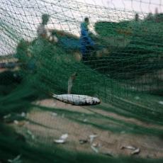 IZNENADIO GA NEOBIČAN PLEN: Bacio je mrežu u potrazi za ribom, a onda je od šoka jedva došao sebi (VIDEO)