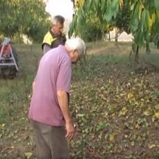 Ilići godinama gaje samo OVU ČUDNOVATU VOĆKU: Po hektaru im je zarada 10.000 EVRA!