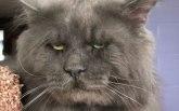 Internet senzacija: Upoznajte Valkeri, macu sa ljudskim likom / FOTO