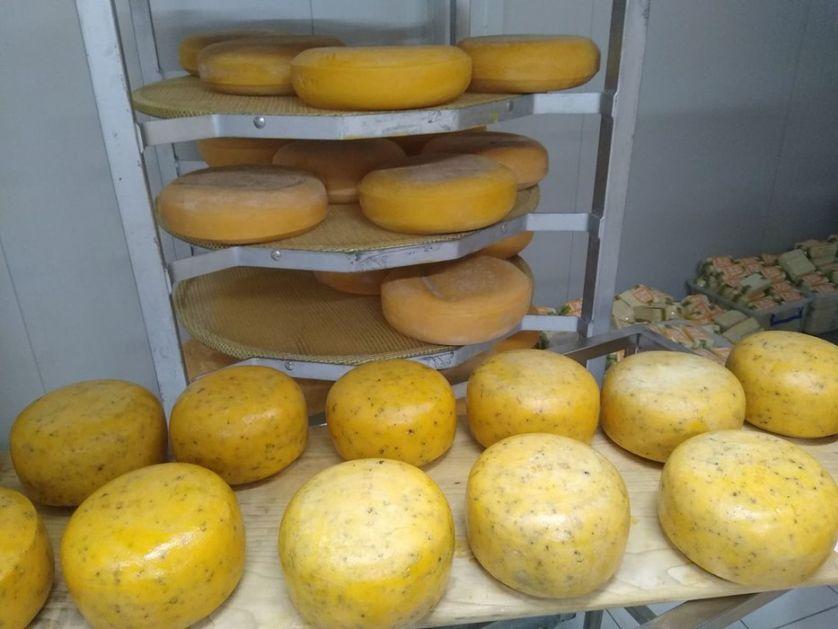Iz gazdinstva porodice iz Čuruga stiže kvalitetan domaći sir