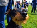 Izbor za najlepše pse i mačke, kao i udomljavanje ugroženih pasa u subotu u Nišu