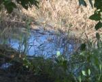 Izlila se kanalizacija u Pasi Poljani