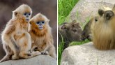 Izumiranje vrsta: Upoznajte životinje koje moramo da sačuvamo