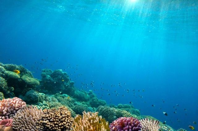 Izvor života: Okeani bi mogli da proizvode šest puta više hrane nego danas