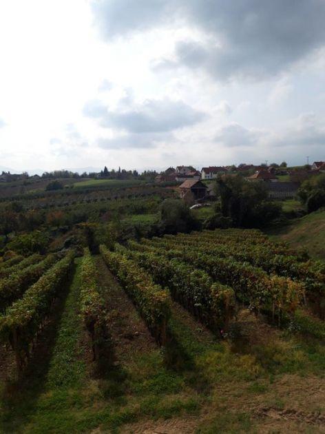 Izvoz vina u Srbiji godišnje raste za oko 20 odsto