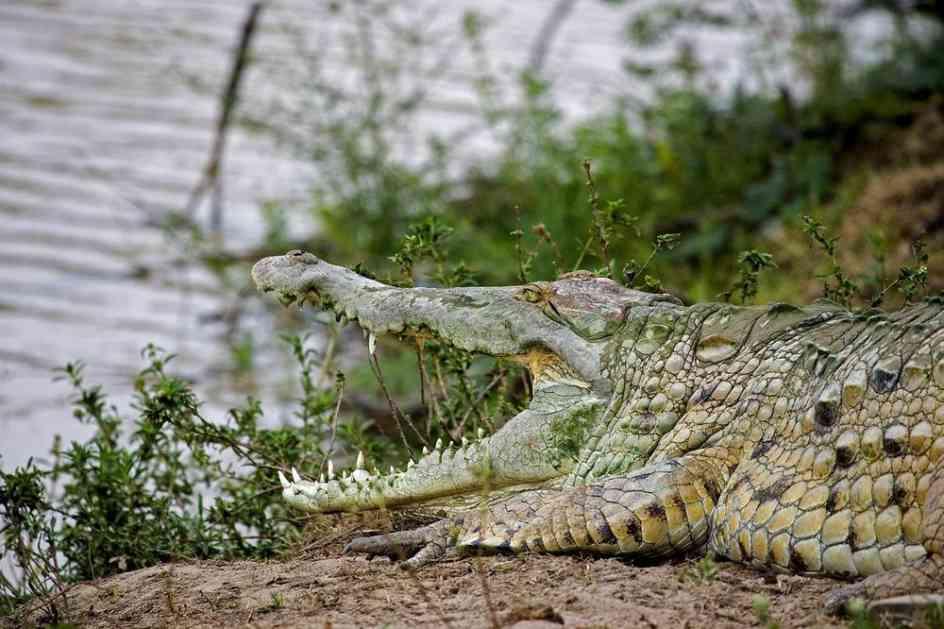 JEZIVA SMRT ŠOKIRALA AUSTRALIJU: Rendžerka stajala u reci, pecala i ćaskala s porodicom, niko nije video da joj ko joj se prikrada s leđa!
