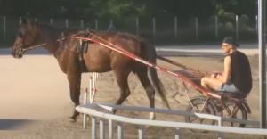 JOKIĆ UŽIVA DOK SE SRBIJA NERVIRA: Nikola Jokić zajahao konja čim je stigao u Sombor! (VIDEO)