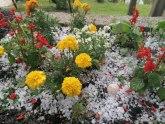 Jak grad veličine oraha pogodio Novu Varoš, obelela dvorišta i bašte FOTO