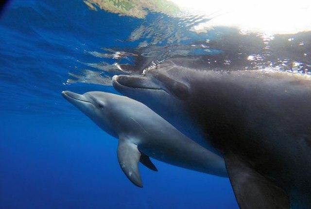 Japanci love i ubijaju delfine: Ovo je izuzetno okrutno