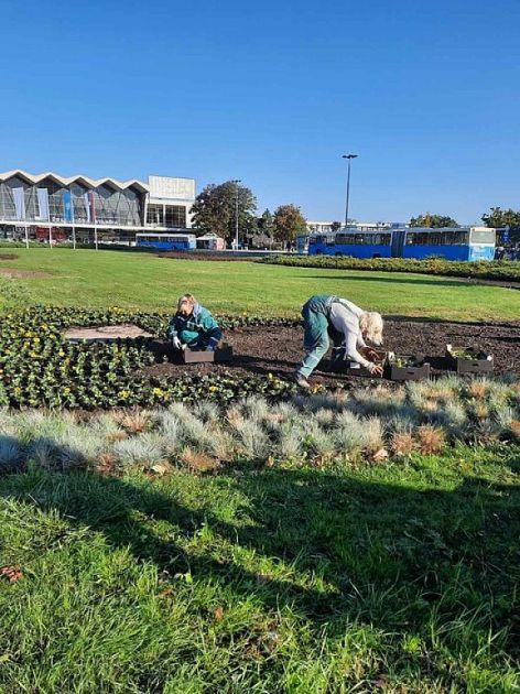 Jesenje ulepšavanje Novog Sada - sadnja zelenila i cveća