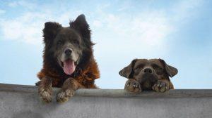 Jeste li nekada gledali dokumentarac o psima? Možete – na Beldocsu!