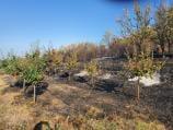 Još bez procene štete od požara koji je zahvatio dva sela kod Gadžinog Hana