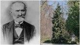 Josif Pančić i omorika: Kako je naučnik otkrio ledenu lepoticu