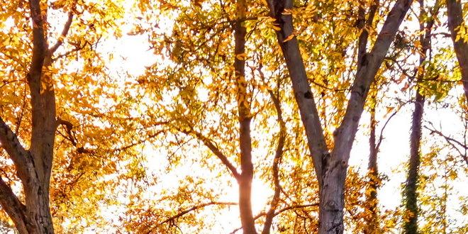 Danas nas očekuje do 29 stepeni, najtopliji 21. oktobar od 1926.