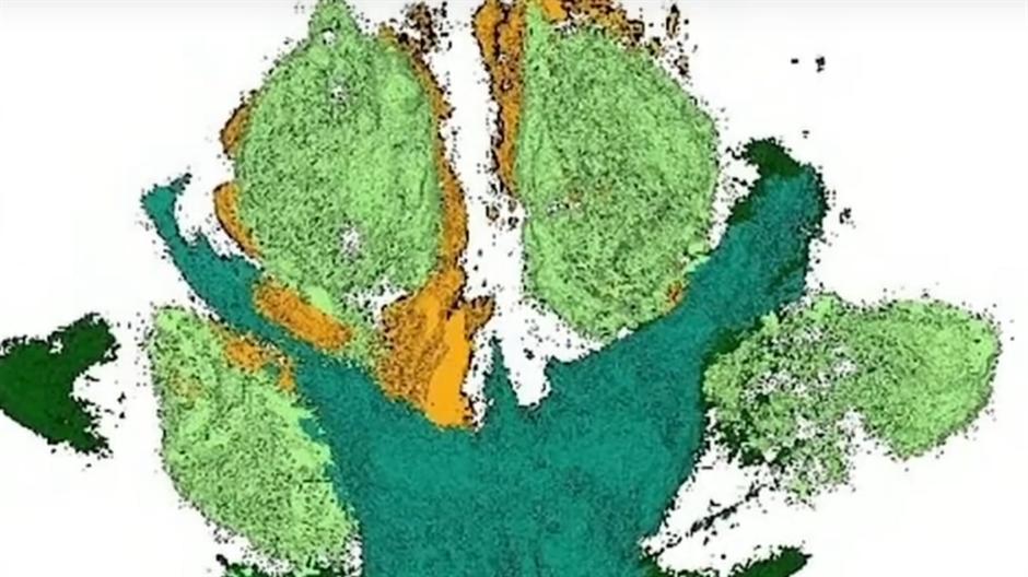KAKVO OTKRIĆE: Pronađen cvet star 115 miliona godina