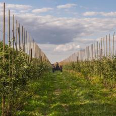 KOJE VOĆE DONOSI NAJVEĆU ZARADU u Srbiji? Ove DVE SORTE su najisplativije za uzgoj, zarada i do 10.000 EVRA!