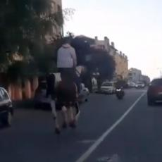 KONJI PONOVO JURE - SAMO NE PO HIPODROMU VEĆ PO ULICAMA BEOGRADA! Čovek jaše životinju usred saobraćajne gužve (VIDEO)