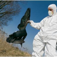 KORONA VIŠE NIJE BAUK, NA POMOLU NOVA OPASNOST SA ISTOKA: Irak prijavio veoma zarazan ptičiji grip!