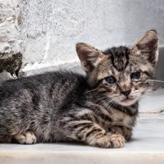 KUDA IDE OVAJ SVET? U Srbiji cveta morbidni biznis, ubijaju i deru mačke zbog krzna, monstruozni lanac trgovine seže do Zapada