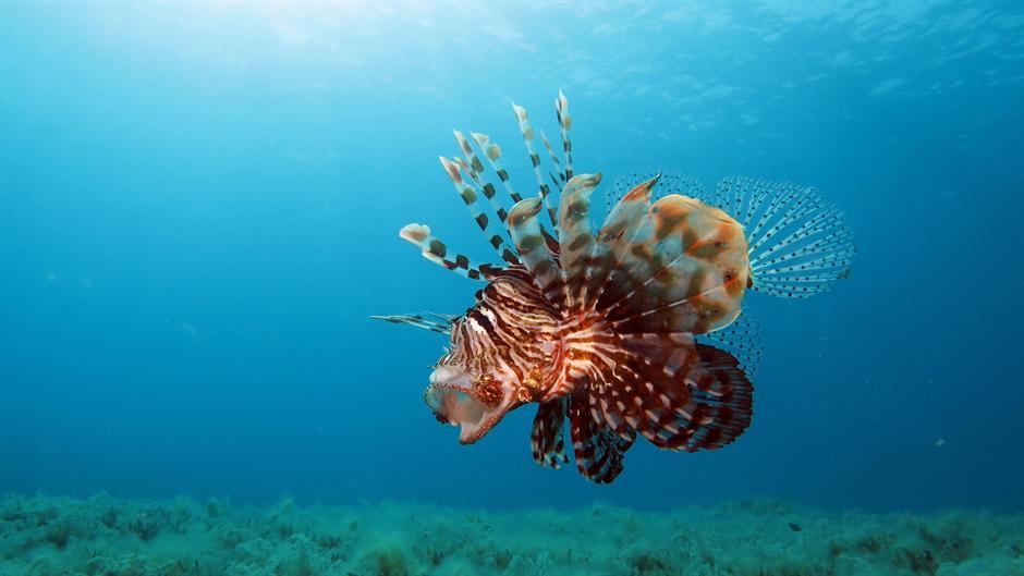 Kako se zaštititi od OTROVNIH riba, meduza... na moru