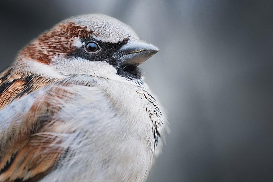 Kako smo saznali gde zimuju ptice selice?