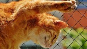 Kako sprečiti pojavu malignih oboljenja kod mačaka? (VIDEO)