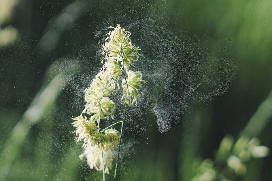 Kalendar alergija 2021: Evo kada će simptomi biti najjači
