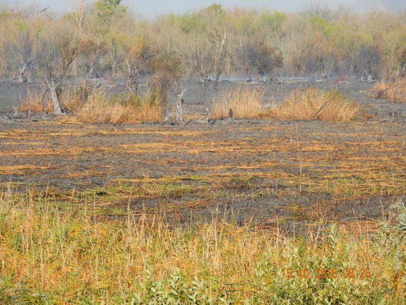 Kampanja uz podršku UN - iskoreniti paljenje strnjike