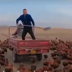 Kineski farmer ima 70.000 KOKOŠAKA! Postao je internet senzacija zbog onoga što RADI sa njima! (VIDEO)