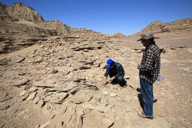 Kineski naučnici pronašli fosil trilobite star 500 miliona godina