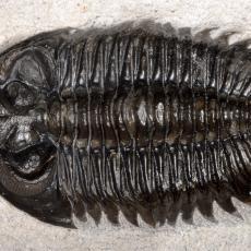 Kineski naučnici pronašli životinjsku vrstu staru 500 miliona godina! Sve ih je začudila jedna stvar (FOTO)