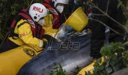 Kit koji je zalutao u Temzu mora da bude uspavan (FOTO)