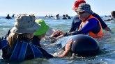Kitovi pevaju pošto su izbegli smrt na ukletoj plaži