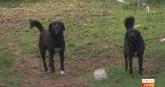 Ko iz čista mira zlostavlja životinje i koje su adekvatne kazne VIDEO