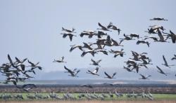 Koalicija 27 traži da se ponovi postupak izmene Zakona o zaštiti prirode
